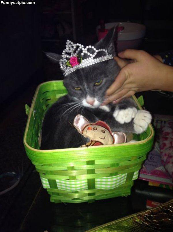 Basket Of Cat