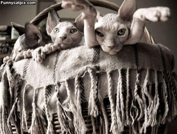 外星猫 - 雪山 - .