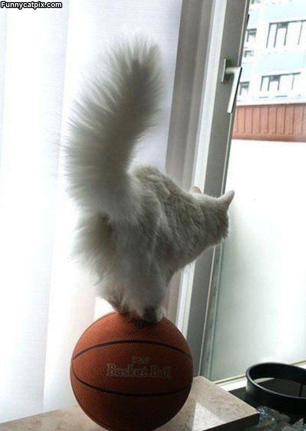 Basketball Balance
