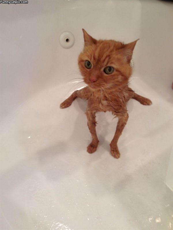 Baths Shrink Me