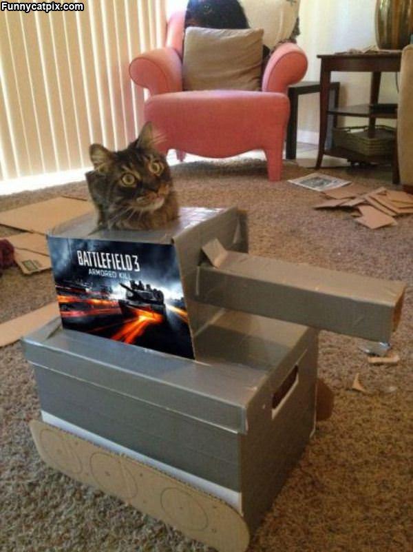 Battlefield Cat