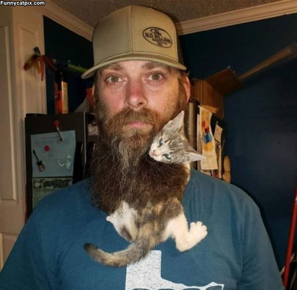 Beard Kitty
