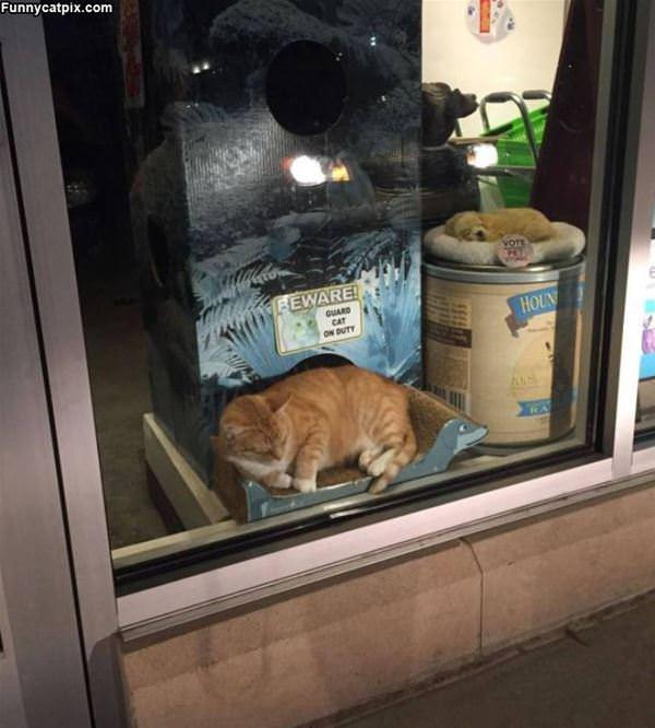 Beware Of The Guard Cat