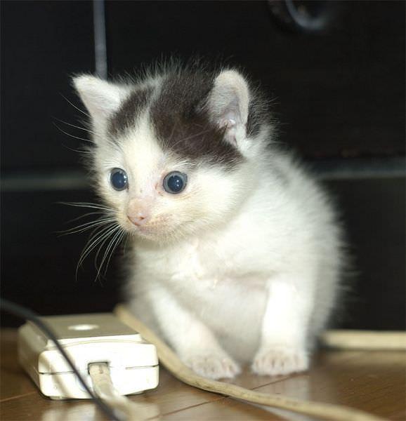 Big kitten eyes
