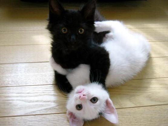 Black Vs White Kitten Picture