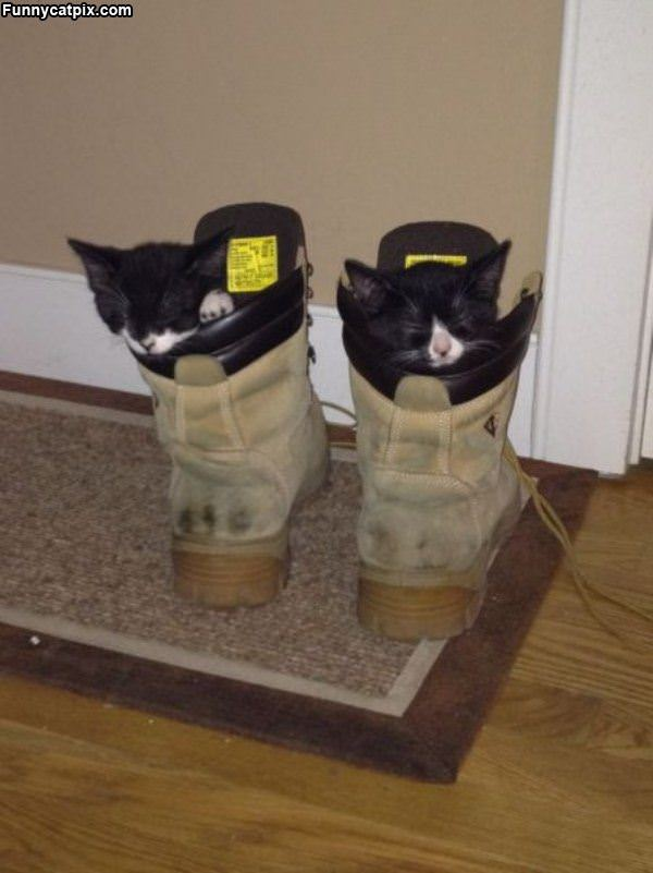 Boot Kittens