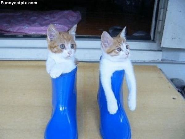 Boots Made For Kittens