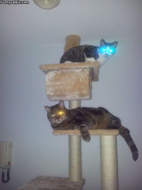 Bot Cats Charging