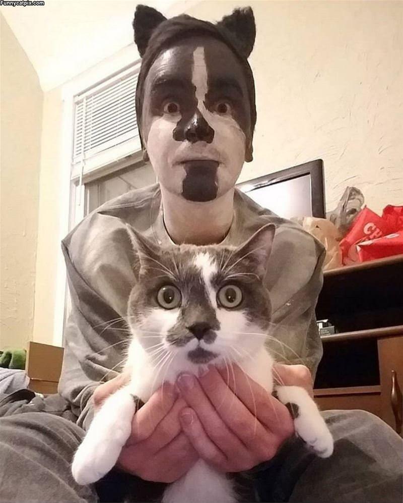 Both Cats