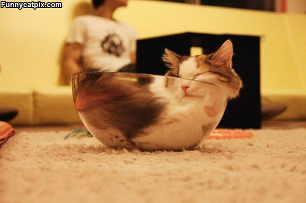 Bowl Of Cat