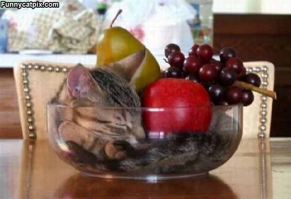 Bowl Of Fruit And Cats
