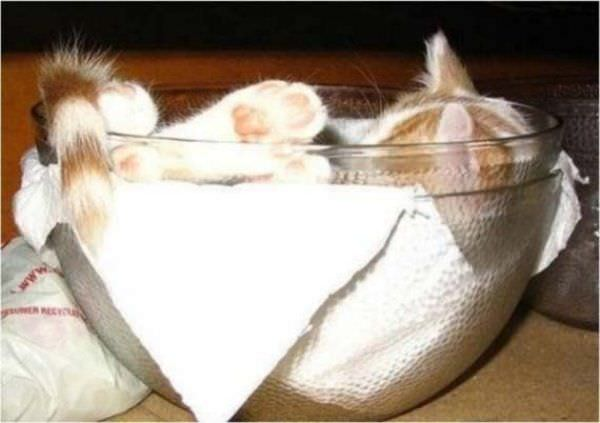 http://www.funnycatpix.com/_pics/Bowl_Of_Sleeping_Cat.jpg