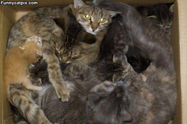 Imagem do dia - Página 38 Box_Full_Of_Cats
