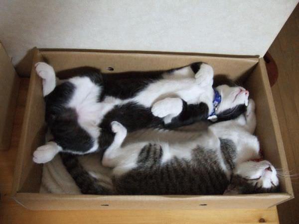 Box Nap