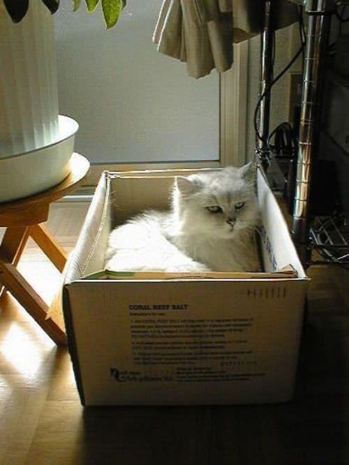 Box Of Cat