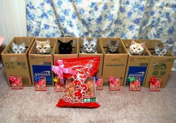 Boxes Of Cats