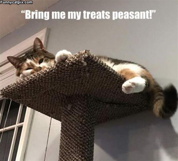 Bring Me My Treats