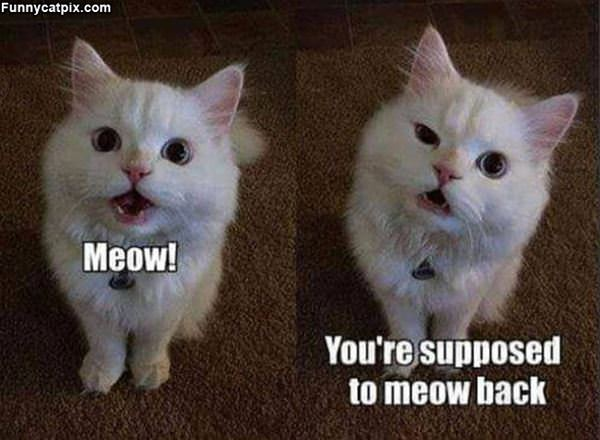 But I Meowed
