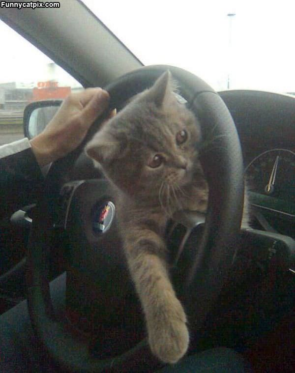 Can I Drive