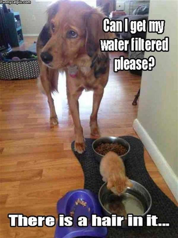 Can I Get A New Water