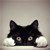 funny cat 3