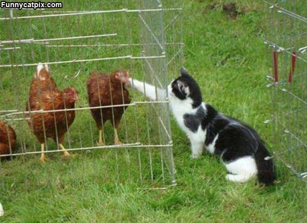 Can I Pet It
