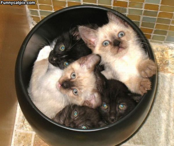 Can Of Kittens