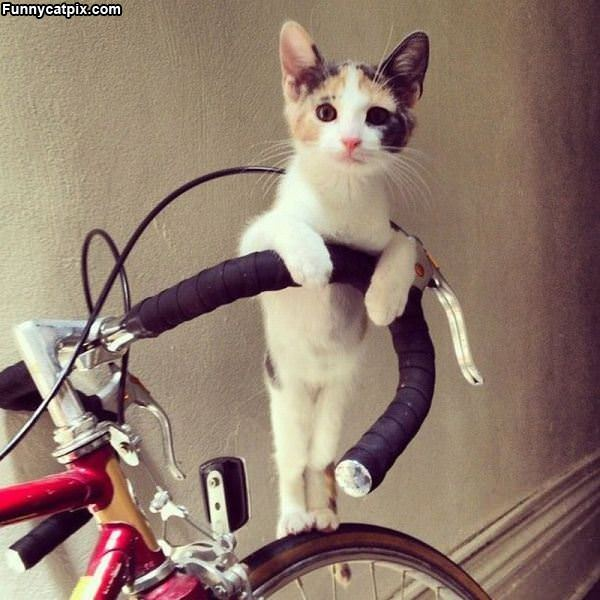 Can We Go For A Bike Ride