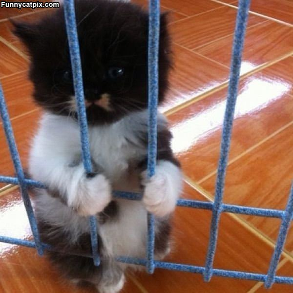 Can You Lets Me Out Please