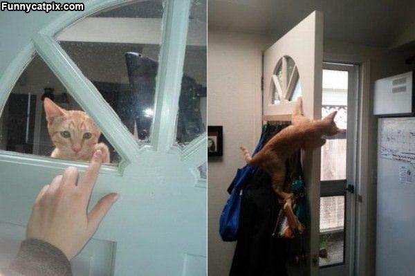 Cat Answering The Door