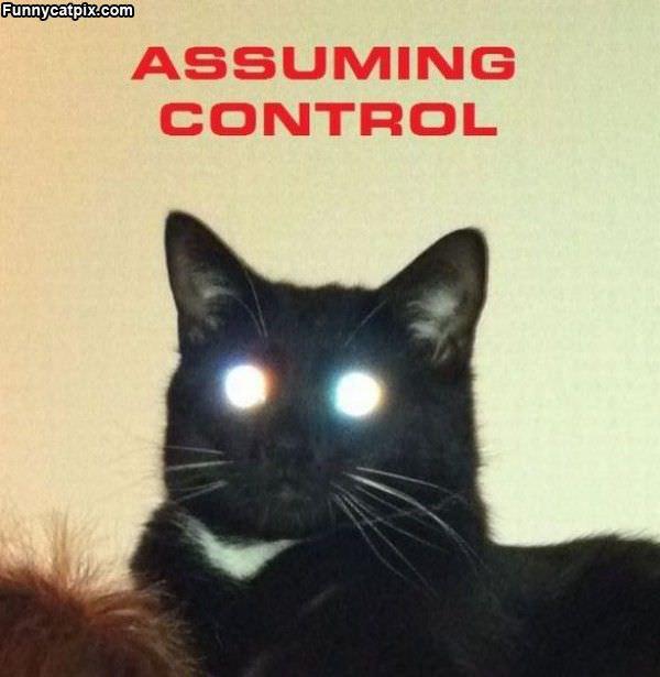Cat Assuming Control
