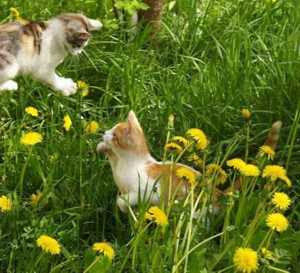 花间的花猫 - 雪山 - .