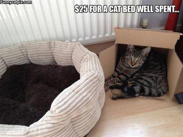 Cat Bed Money Well Spent