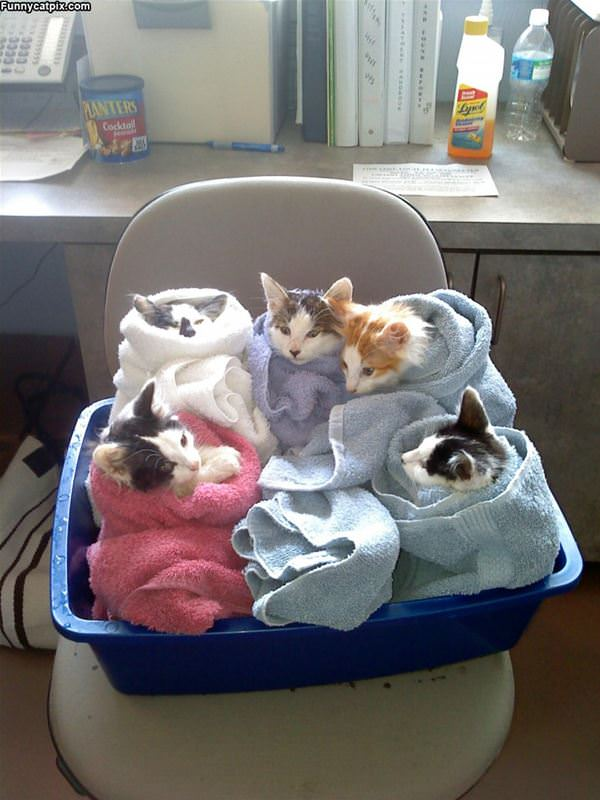 Cat Bundles