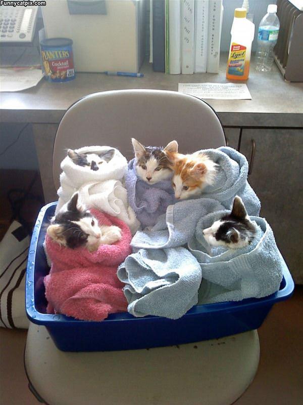 Cat Bundles