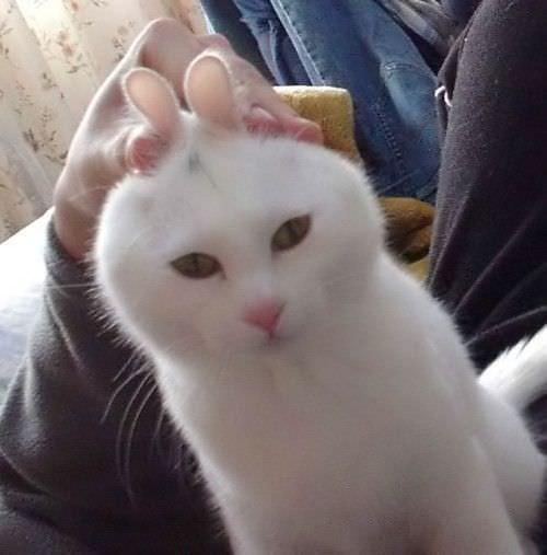 兔猫 - 雪山 - .