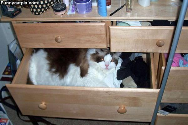 Cat Cloths