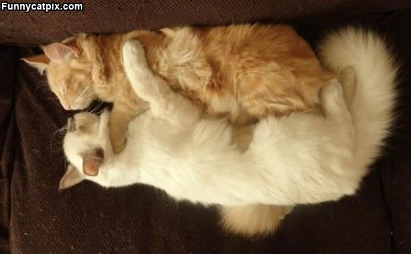 Cat Comfy Sleep