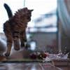 funny cat 2