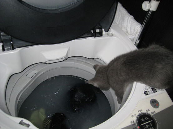 Cat doing laundry