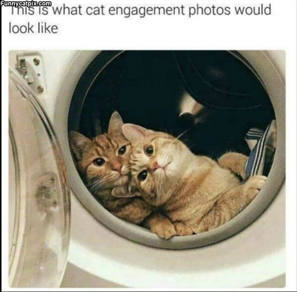Cat Engagement Photos