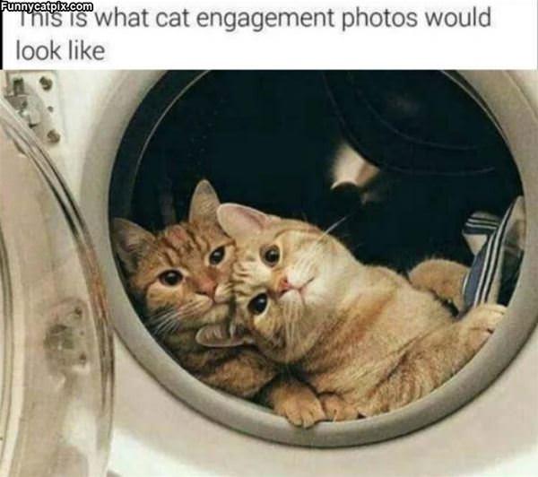 Cat Engagement Photos