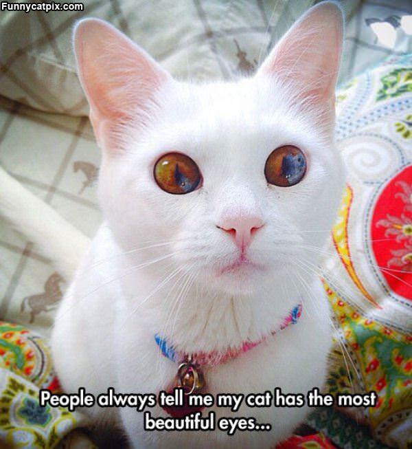 最漂亮的猫眼 - 雪山 - .