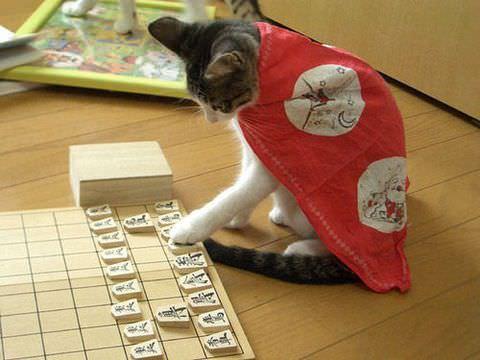 Cat Games.