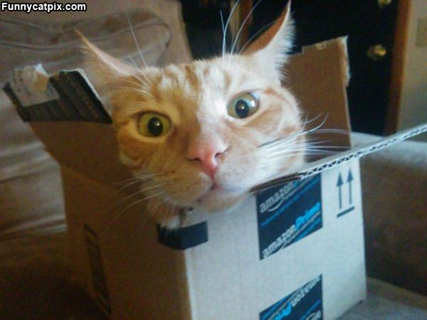 Cat Hanging In The Box