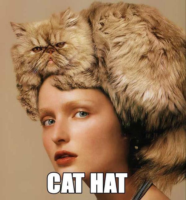 cat in hat hat clip art. cat in hat images. cat in hat