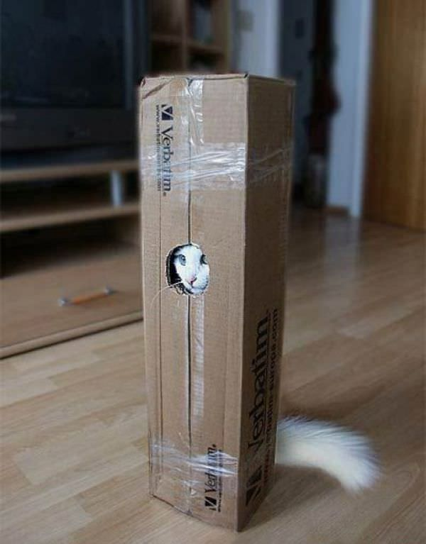 http://www.funnycatpix.com/_pics/Cat_In_The_Box.jpg
