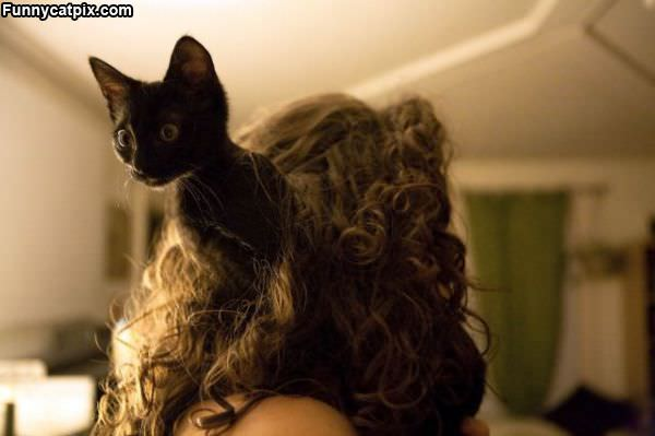 Cat In The Hair