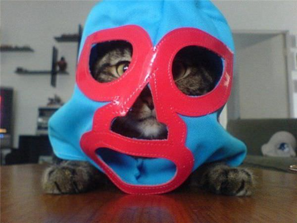 Cat In The Mask