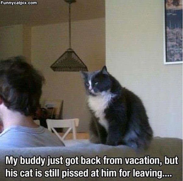 Cat Is Not Happy